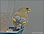 19th Mar 2021 - Sticky beak