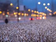 19th Mar 2021 - Snow again