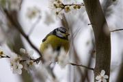 19th Mar 2021 - A bird in the bush
