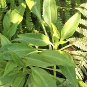 18th Mar 2021 - Green foliage