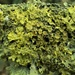 And more lichen by julienne1