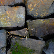 27th Feb 2021 - Between a rock and a hard place