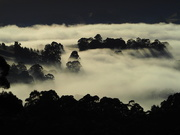 21st Mar 2021 - Misty Morning