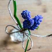 20th Mar 2021 - Blue Saturday