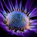 UV Purple flower by lindasees