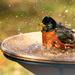 bath time by jernst1779