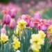 Spring Joy by sunnygirl
