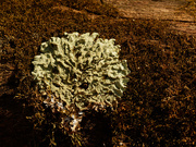 21st Mar 2021 - lichen