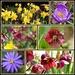Garden Spring Flowers