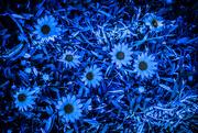 19th Mar 2021 - Blue 3 - Friday