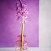 Lily by katarzynamorawiec