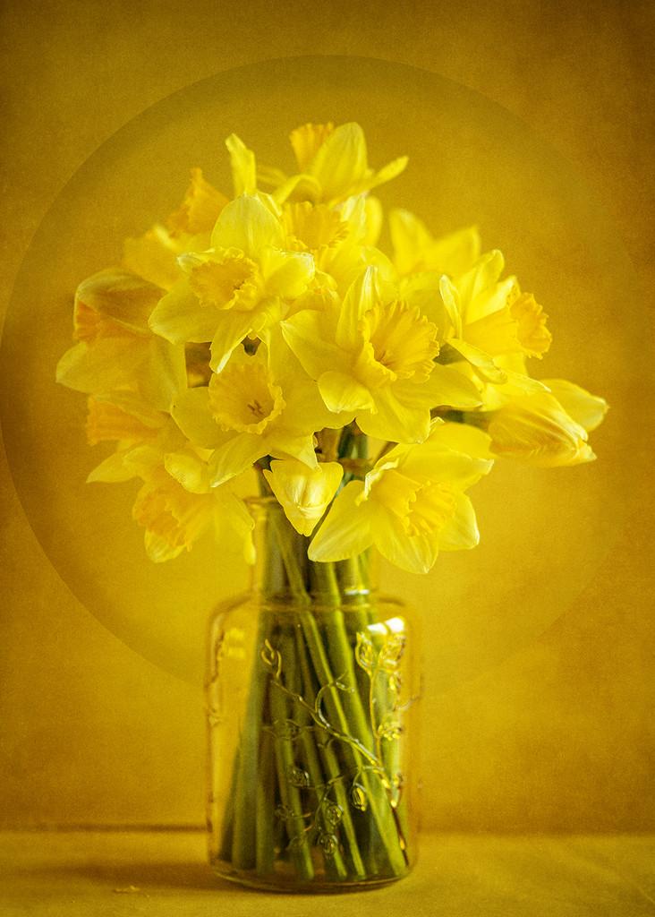 Sunny yellow by katarzynamorawiec