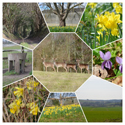 22nd Mar 2021 - Country walk