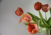 23rd Mar 2021 - 23. Tulips 2