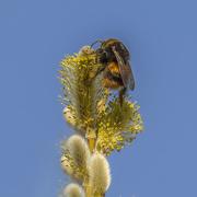 23rd Mar 2021 - Bee