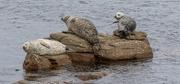 23rd Mar 2021 - Leebitton Seals