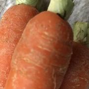 23rd Mar 2021 - Carrots