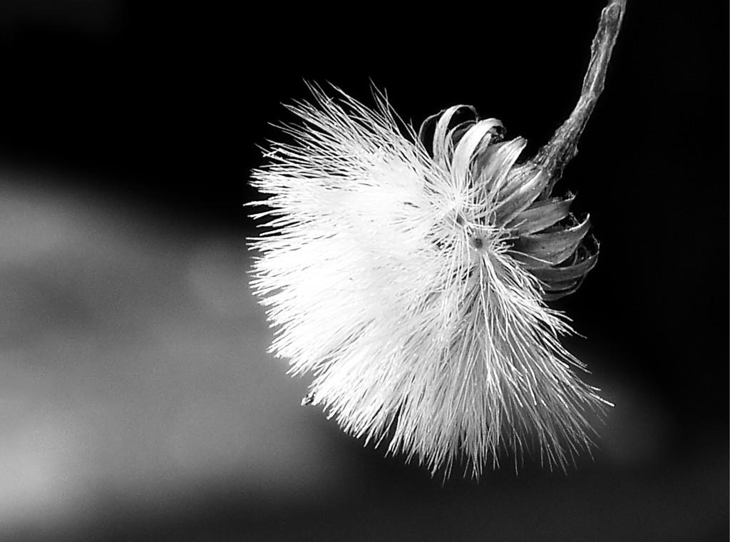 Bristles... by marlboromaam