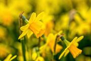 24th Mar 2021 - Rainbow Yellow - Week 4