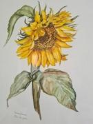 24th Mar 2021 - Yellow Snowflower