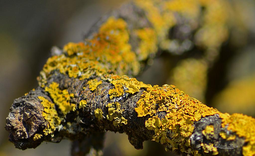 Lichen - Rainbow Month by yolanda