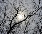 24th Mar 2021 - Dim Sun