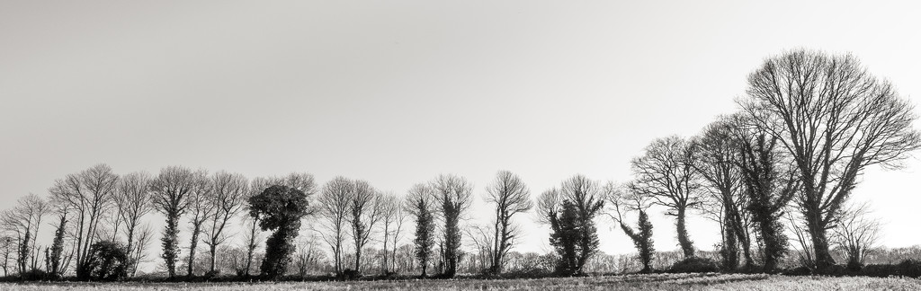 Tree Lined Field Border... by vignouse