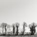 Tree Lined Field Border...