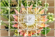 25th Mar 2021 - Thirty pieces of a King Protea