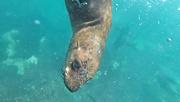 25th Mar 2021 - Underwater gopro shot