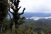 20th Mar 2021 - Waikaremoana track