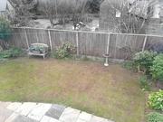 25th Mar 2021 - Where Did My Lawn Go??