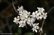 25th Mar 2021 - Beautiful blossom