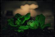 25th Mar 2021 - Last green