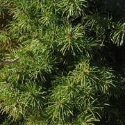 25th Mar 2021 - Green Bush