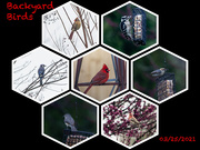 25th Mar 2021 - birds in the backyard