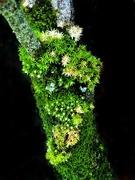 25th Mar 2021 - Shades of Green