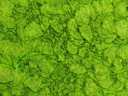 25th Mar 2021 - green algae