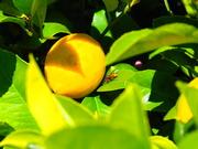 26th Mar 2021 - Yummy Yellow