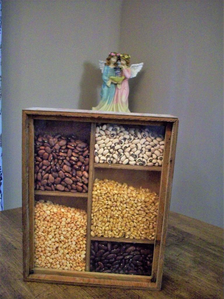 ecology box by stillmoments33