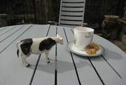 26th Mar 2021 - Bambi takes tea