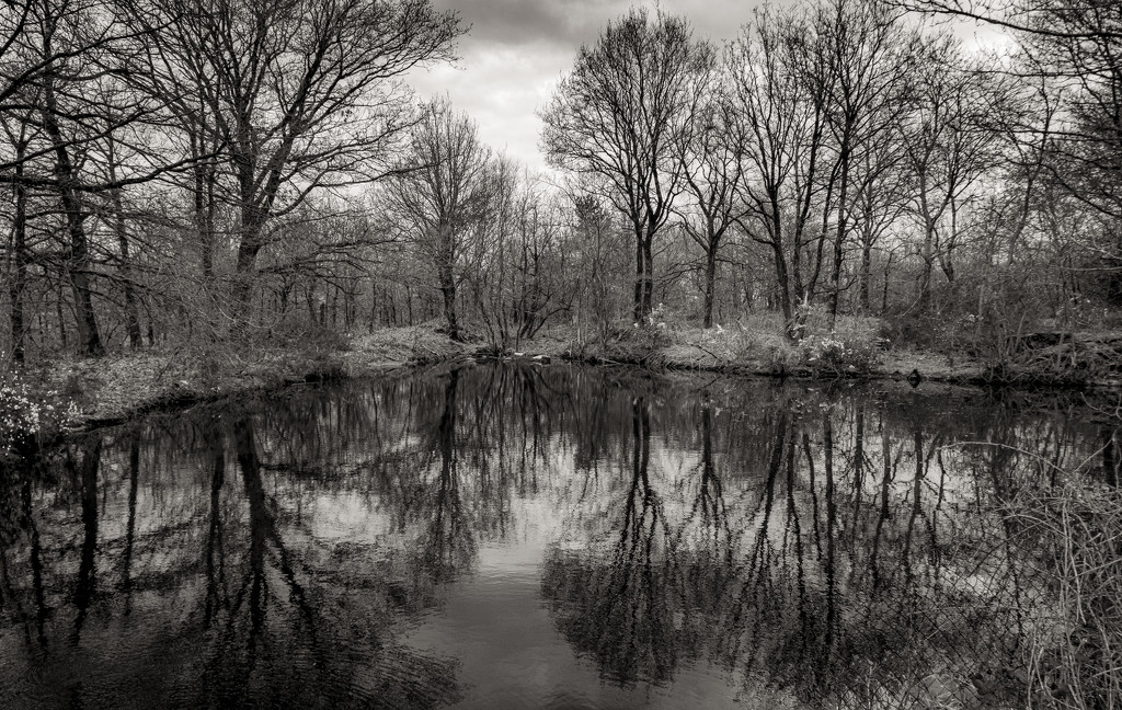 Surface Water Run-Off Pond... by vignouse