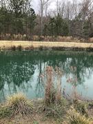 24th Mar 2021 - Drainage pond