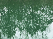 24th Mar 2021 - Green reflection