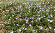 25th Mar 2021 - Spring carpet