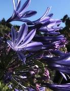 27th Mar 2021 - Purple 4