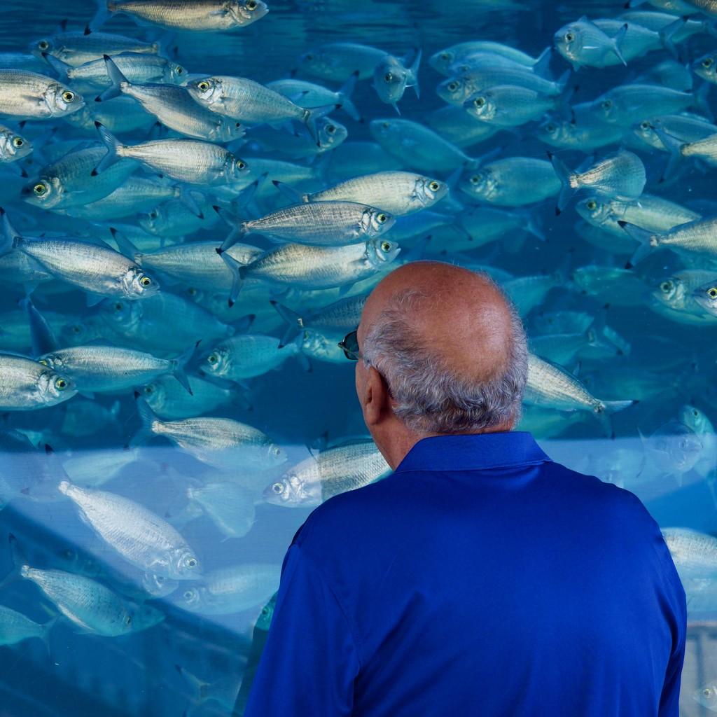 Fish Gazing P2160910 by merrelyn