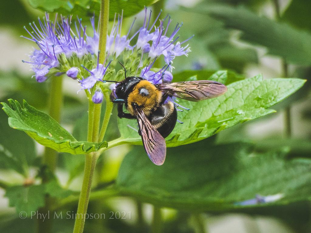 Bizzzzeee Bee by elatedpixie