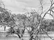 27th Mar 2021 - A tree