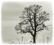 27th Mar 2021 - Lonely Tree